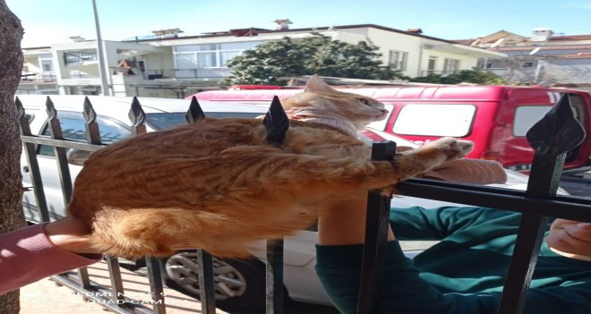 Demir korkuluğa sıkışan kediyi kurtardılar
